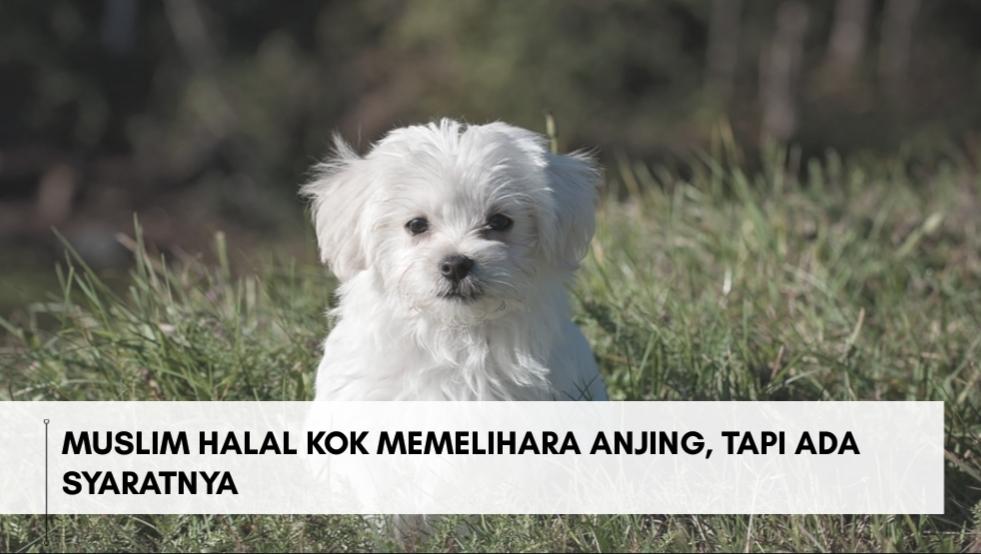 Muslim Halal Kok Memelihara Anjing, Tapi Ada Syaratnya